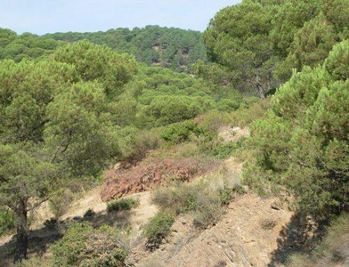 Andalucía alberga el 35% de la potencia total para aprovechamiento de biomasa que existe en España